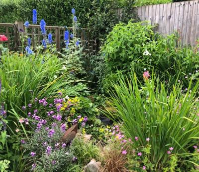 Open Your Garden for Phyllis Tuckwell
